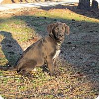 Adopt A Pet :: GATSBY - Bedminster, NJ
