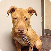 Adopt A Pet :: Maddox - Owasso, OK