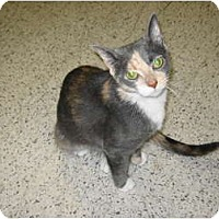 Adopt A Pet :: Savannah - Warminster, PA