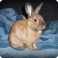 Adopt A Pet :: Tate - Williston, FL