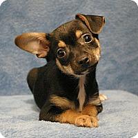 Adopt A Pet :: Ted - Sacramento, CA