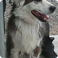 Adopt A Pet :: Buddy - MONTE VISTA, CO