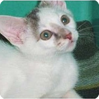 Adopt A Pet :: Joey - Secaucus, NJ