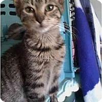 Adopt A Pet :: Liz (kl) - Little Falls, NJ