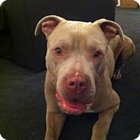 Adopt A Pet :: Gigi - Santa Monica, CA