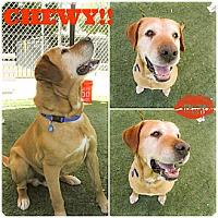 Adopt A Pet :: Chewy super Urgent - Sacramento, CA