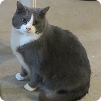 Adopt A Pet :: Simon - Geneseo, IL