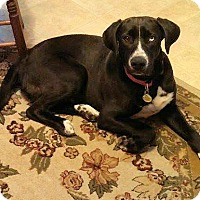 Adopt A Pet :: Charlie - Delaware, OH