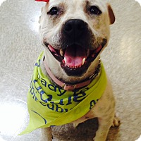 Adopt A Pet :: QD - Westley, CA