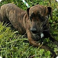 Adopt A Pet :: Payton - Toledo, OH
