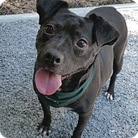 Adopt A Pet :: Dixee - Mocksville, NC
