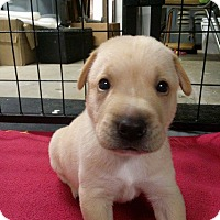 Adopt A Pet :: Luke - Westminster, MD