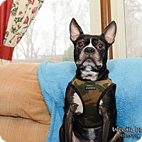 Adopt A Pet :: Bishop - Greensboro, NC