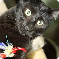 Adopt A Pet :: Aker - Yuba City, CA