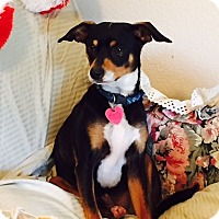 Adopt A Pet :: Marley - Winters, CA