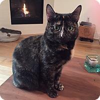 Adopt A Pet :: Mama - Los Angeles, CA