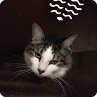 Adopt A Pet :: Donner - Diamond Springs, CA
