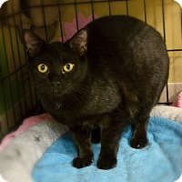 Adopt A Pet :: Carbon - Byron Center, MI