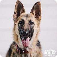 Adopt A Pet :: Mindy - Portland, OR