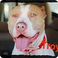 Adopt A Pet :: Troy - Old Saybrook, CT