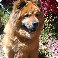 Adopt A Pet :: Sassparilla (aka Sassy) - Potomac, MD