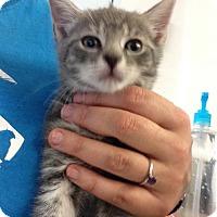 Adopt A Pet :: Cappadonna - Camden, DE