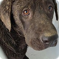 Adopt A Pet :: Tahoe - Fresno CA, CA