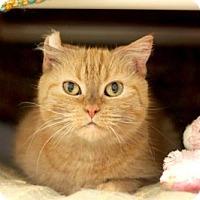 Adopt A Pet :: MOLLY - Boston, MA