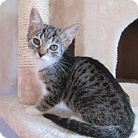 Adopt A Pet :: Chipmonk - San Bernardino, CA