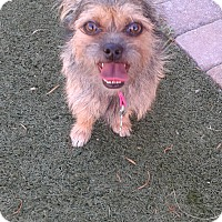 Adopt A Pet :: Minnie - Las Vegas, NV