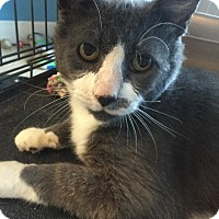 Adopt A Pet :: Clint - LaGrange, KY