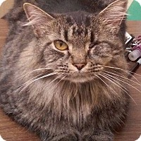 Adopt A Pet :: WINKIE - Hopkinsville, KY