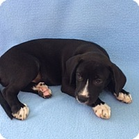 Adopt A Pet :: Mason - East Sparta, OH