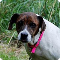 Adopt A Pet :: Ariel - Salem, WV
