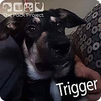 Adopt A Pet :: Trigger - Regina, SK