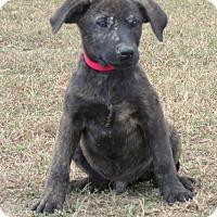 Adopt A Pet :: BO - parissipany, NJ