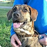 Adopt A Pet :: Lynnie - Beacon, NY