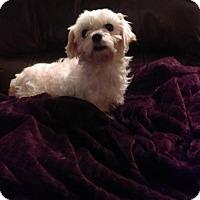 Adopt A Pet :: YOLONDA - WOODSFIELD, OH