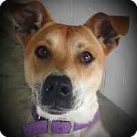 Adopt A Pet :: Jasper - Paducah, KY