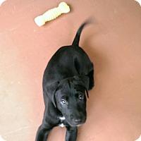 Adopt A Pet :: Argos - Brunswick, ME
