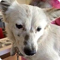 Adopt A Pet :: Pippin-ADOPTION PENDING - Boulder, CO