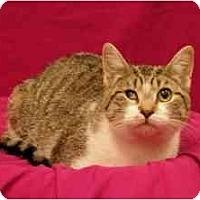 Adopt A Pet :: Elsa - Sacramento, CA