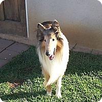 Adopt A Pet :: Trent - Gardena, CA