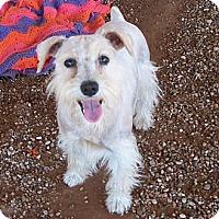 Adopt A Pet :: Lizzy - Post, TX