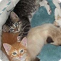 Adopt A Pet :: Tangy - Acme, PA