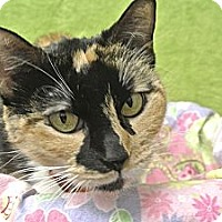 Adopt A Pet :: Amber - Foothill Ranch, CA