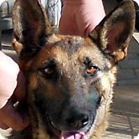Adopt A Pet :: Sierra - Oakley, CA