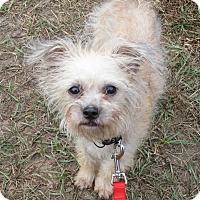 Adopt A Pet :: Manny - Orange Park, FL