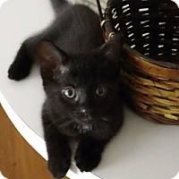 Adopt A Pet :: Specter - Ft. Lauderdale, FL