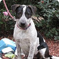 Adopt A Pet :: Queen Anne - Oakland, AR